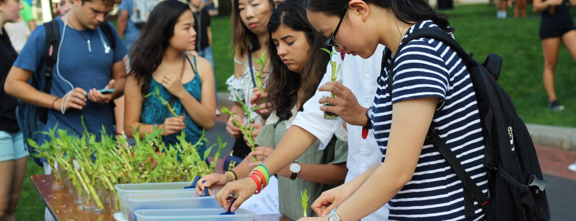 A group of students planting bamboo plants at the Global Fair